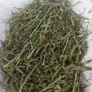 dried-andrographis-paniculata-500x500